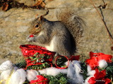 POTW Squirrel's wish list fresh cranberries
