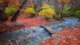 Rivière-bois-automne