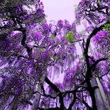 Pracht in violett