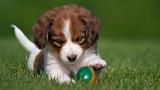 Щенок с мячиком