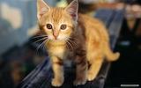 Cat-animals-look