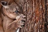 Animal in wild