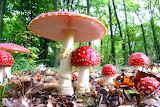грибы 25
