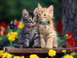 Cute-Cats-cats-33440894-1600-1200