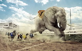 Elephant-Running-With-Dogs