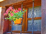Hanging Blossoms