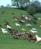 Cavalls - Horses