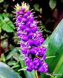 Flores446