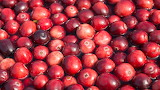 US Cranberries