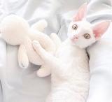 White & Wonderful