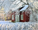 Wooden cottage surrounded by frost