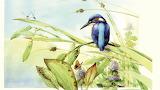 Kingfisher ~ Marjolein-Bastin