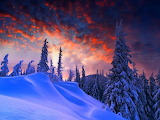 Winter sunset over snow covered pines