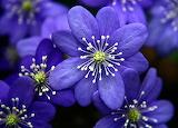 40-blue-flowers