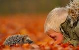 A Hedgehog And A Boy