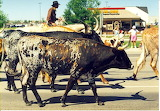 Great American Cattle Drive (1995)