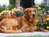 Dogs-flowers