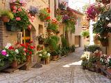 Flowered Back Alley