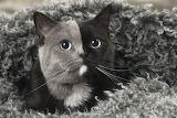 Gray & Black Cat