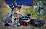 dog in a witch costume