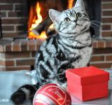 Kätzchens Bescherung