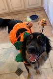 Halloween Doggo