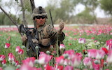 Soldier in a field of flowers