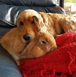 Dog and rabbit snuggling