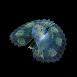 "Science tumblr currentsinbiology ""Ocean Photography"" ""Ryo Minemi"