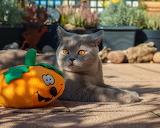 Halloween Cats Pumpkin Glance 572186 1280x1024