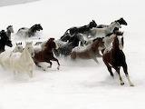 Horses-running-animal