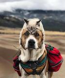 Dog wearing cat hat