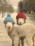 Animals tumblr mohnblumesworld Sheep