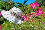 hat on flower bush