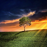 Majestic Tree...