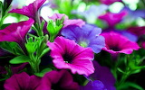 #Purple and Blue Flowers