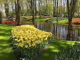 keukenhof_flowers_creek