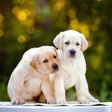 ♥ Puppies...