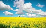 Summer-sky-yellow field