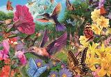 Hummingbird Garden - Adrian Chesterman