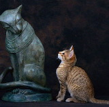 Mutual Admiration