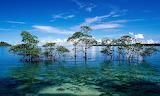 Arbua-mangrove