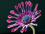 Flor exótica27