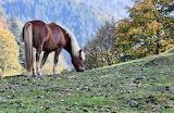 Meadow Horse