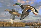 WM Duck 3