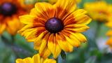 Yellow and orange flower