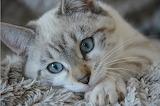 Uno sguardo dolce dolce