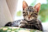 Beautiful Kitty...