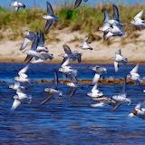 Flock of Birds...