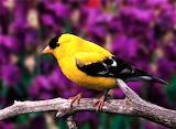 #Bird on a Branch
